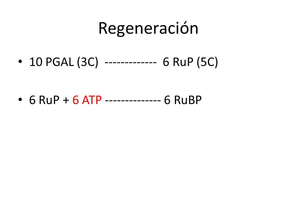 Regeneración 10 PGAL (3C) ------------- 6 RuP (5C)
