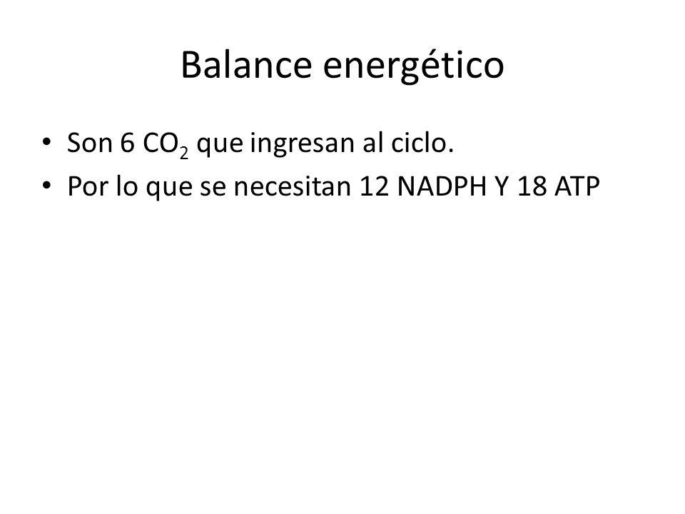 Balance energético Son 6 CO2 que ingresan al ciclo.