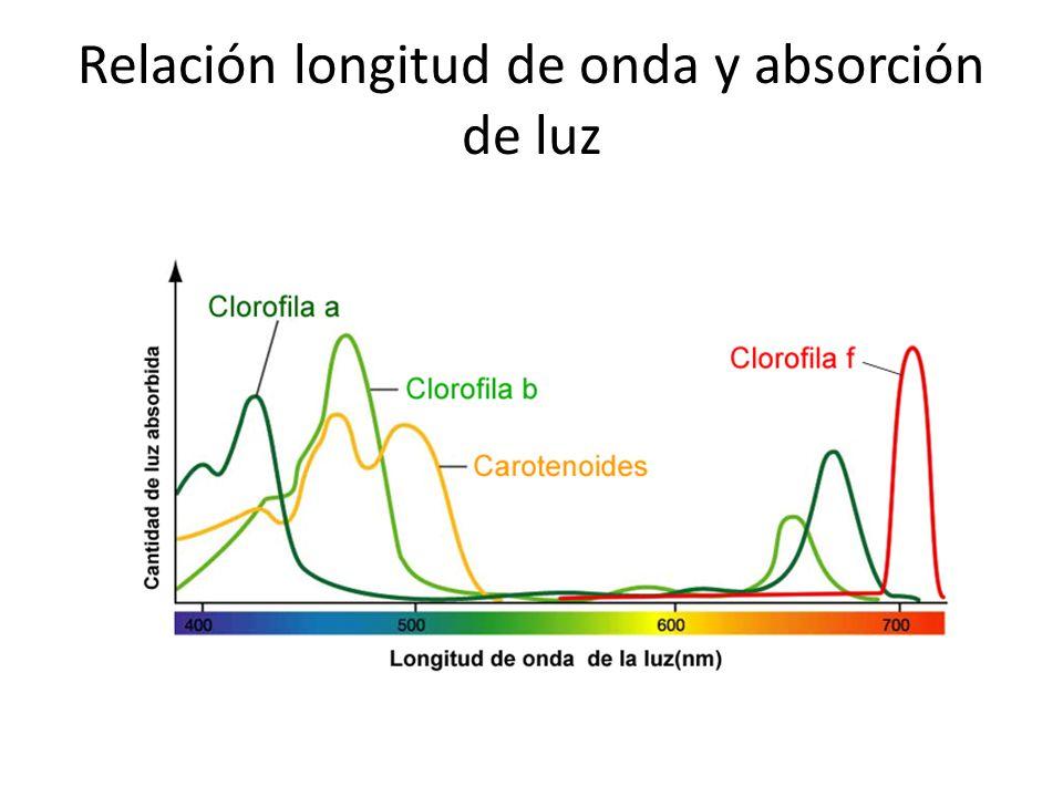 Relación longitud de onda y absorción de luz