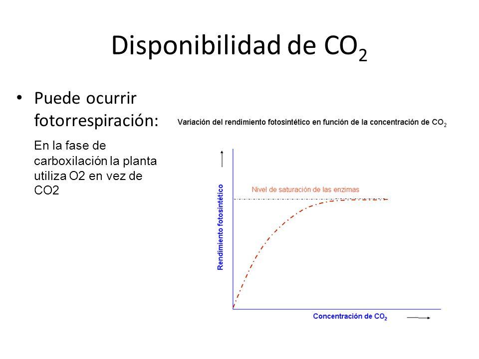 Disponibilidad de CO2 Puede ocurrir fotorrespiración:
