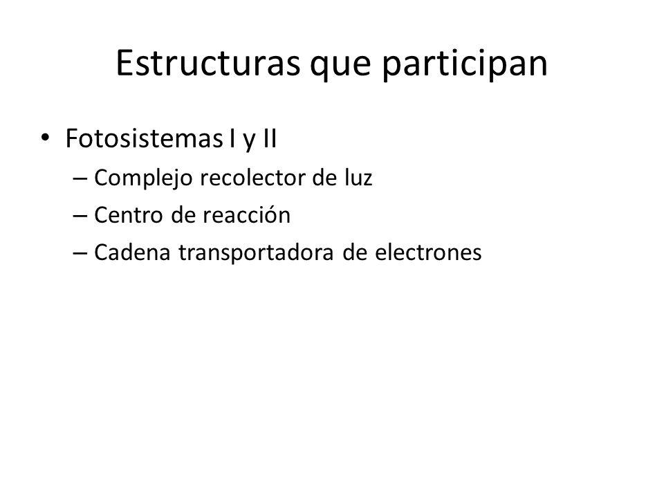 Estructuras que participan