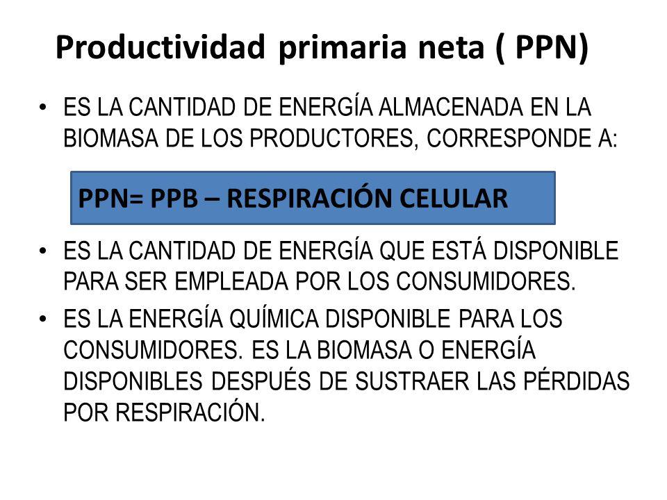 Productividad primaria neta ( PPN)