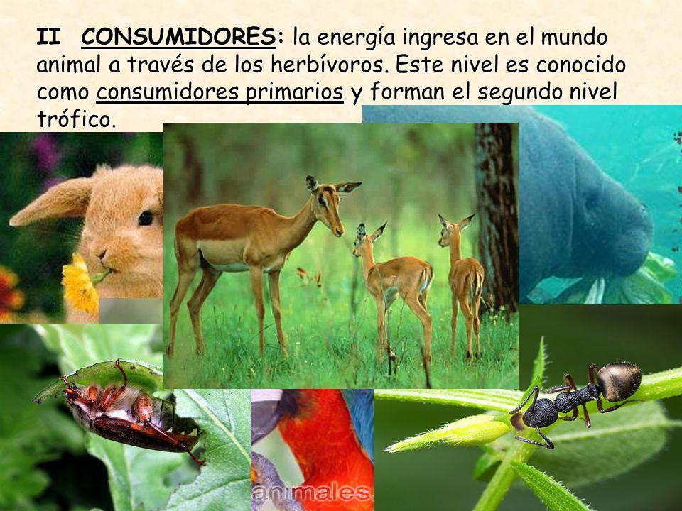 II CONSUMIDORES: la energía ingresa en el mundo animal a través de los herbívoros.