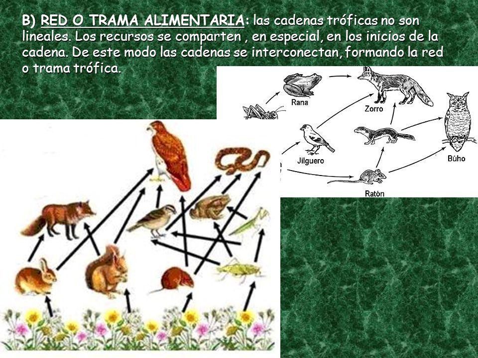 B) RED O TRAMA ALIMENTARIA: las cadenas tróficas no son lineales
