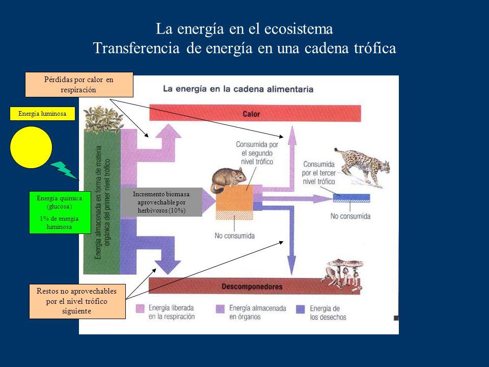 La energía en el ecosistema Transferencia de energía en una cadena trófica