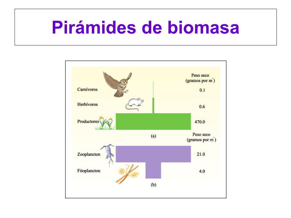 Pirámides de biomasa
