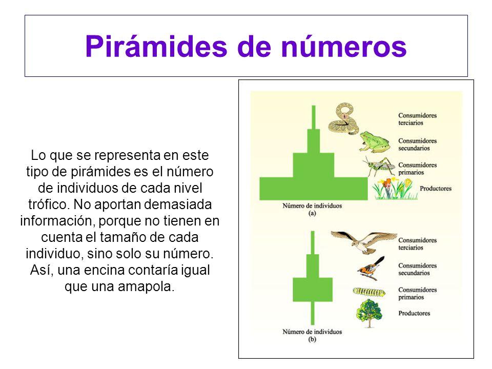 Pirámides de números