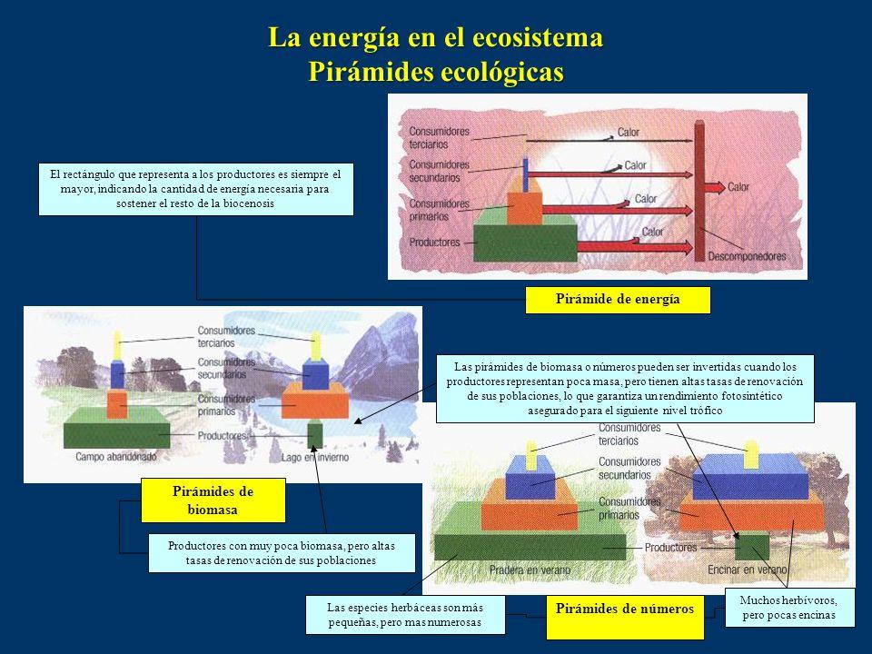 La energía en el ecosistema Pirámides ecológicas
