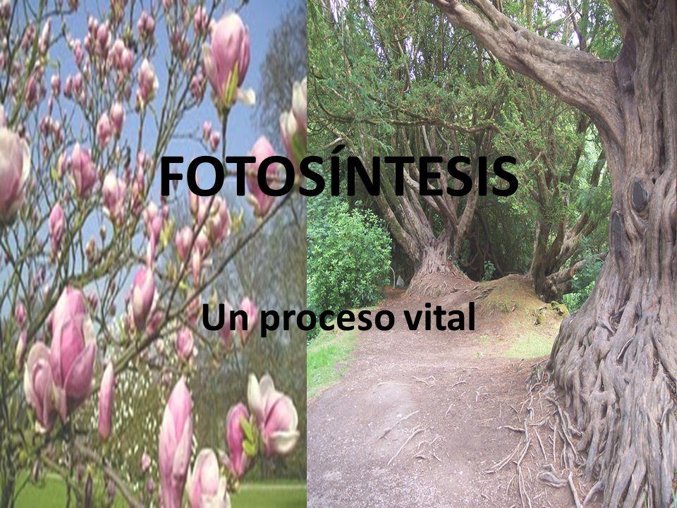FOTOSÍNTESIS Un proceso vital