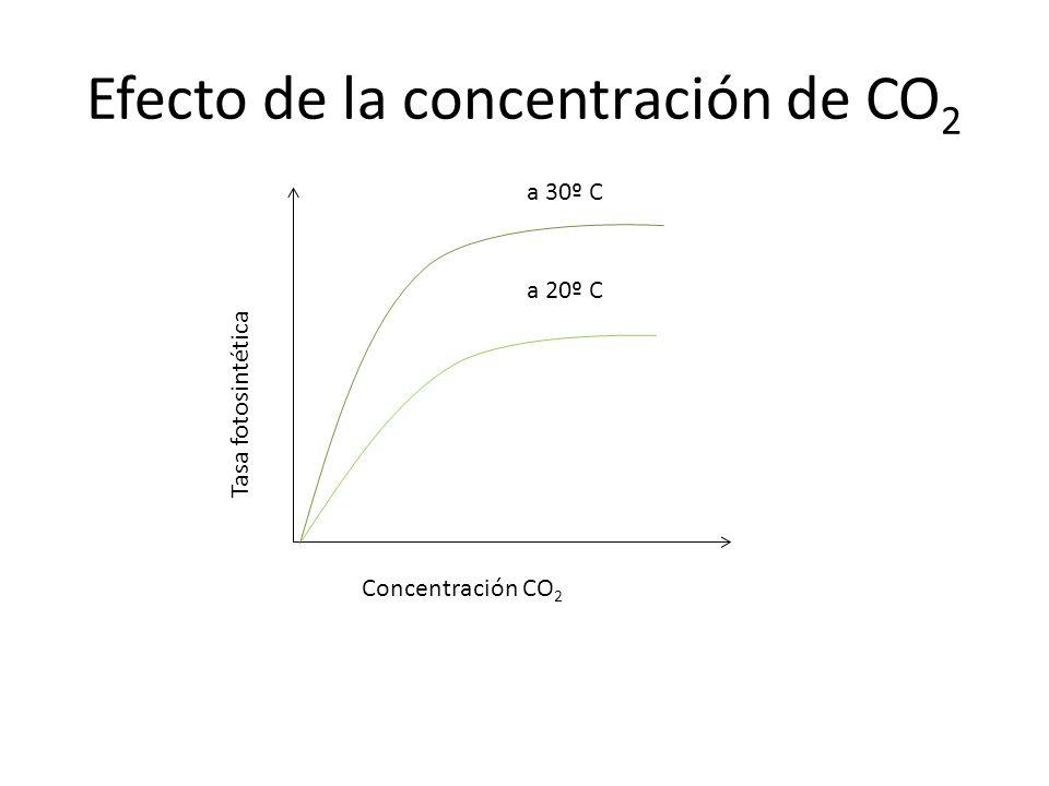 Efecto de la concentración de CO2