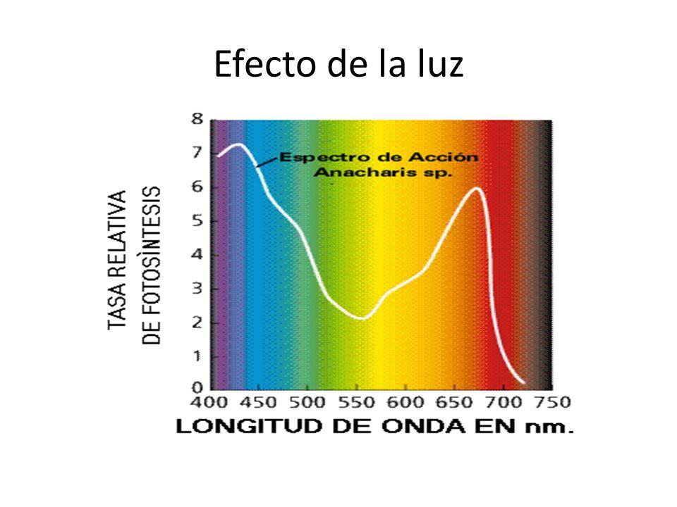 Efecto de la luz