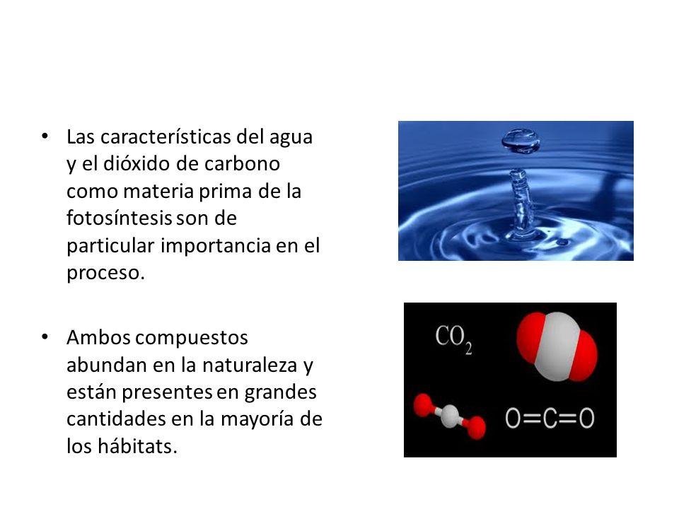 Las características del agua y el dióxido de carbono como materia prima de la fotosíntesis son de particular importancia en el proceso.