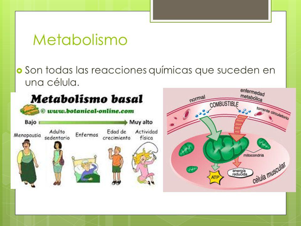 Metabolismo Son todas las reacciones químicas que suceden en una célula.