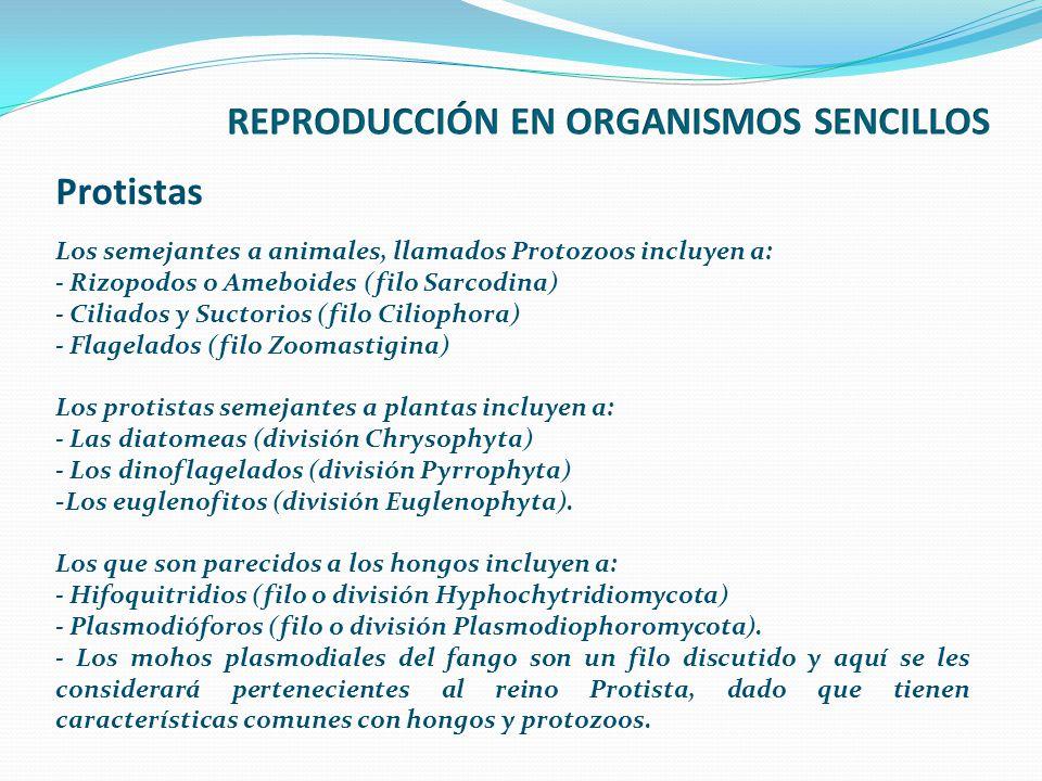 REPRODUCCIÓN EN ORGANISMOS SENCILLOS