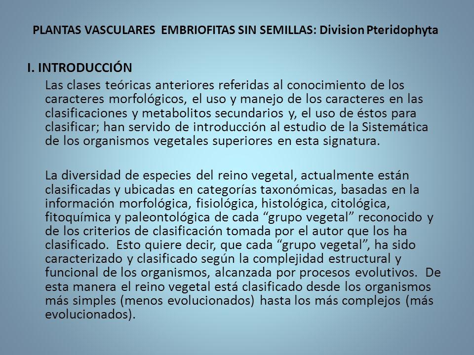 PLANTAS VASCULARES EMBRIOFITAS SIN SEMILLAS: Division Pteridophyta