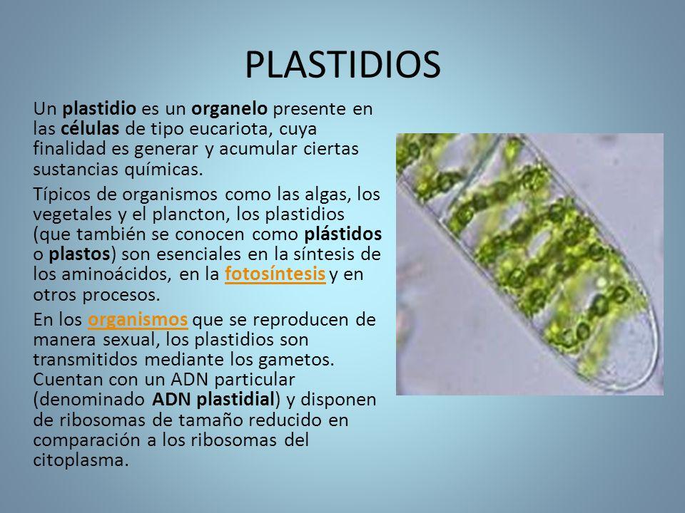 PLASTIDIOS Un plastidio es un organelo presente en las células de tipo eucariota, cuya finalidad es generar y acumular ciertas sustancias químicas.