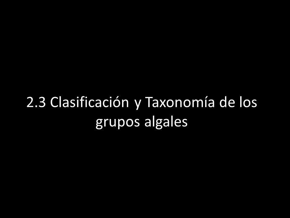 2.3 Clasificación y Taxonomía de los grupos algales