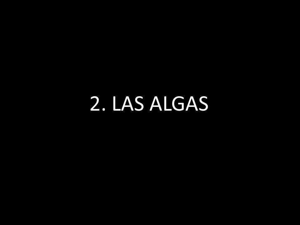 2. LAS ALGAS