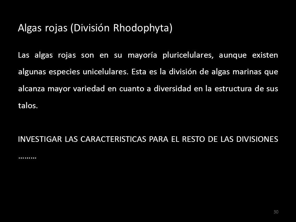 Algas rojas (División Rhodophyta)