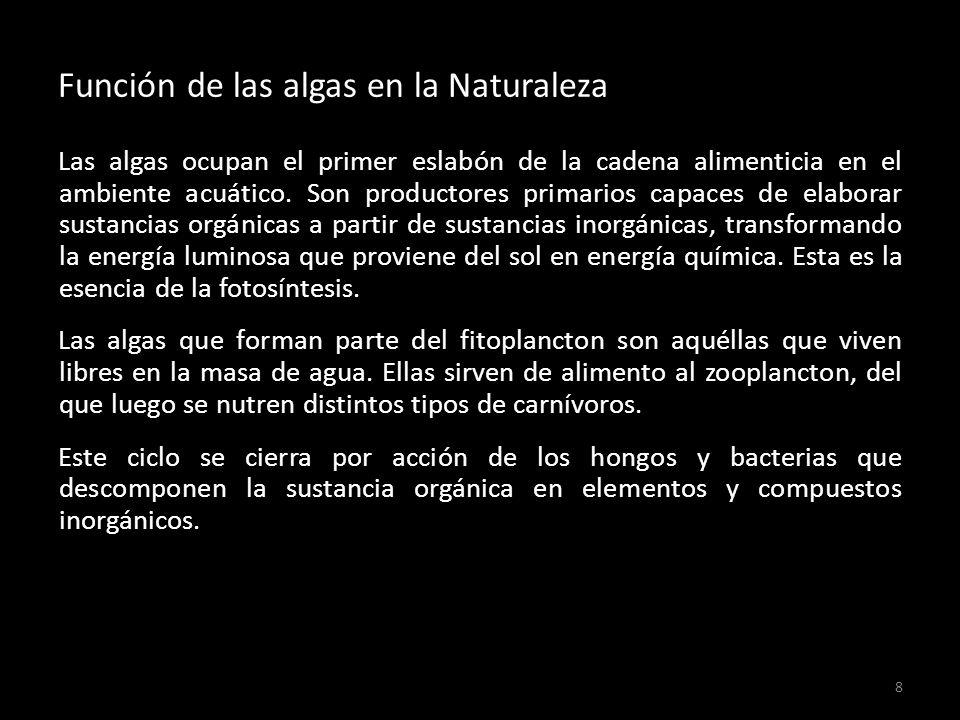 Función de las algas en la Naturaleza