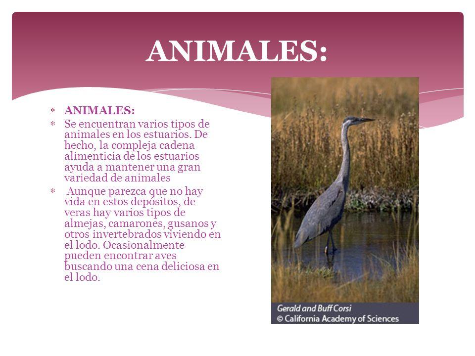 ANIMALES: ANIMALES: