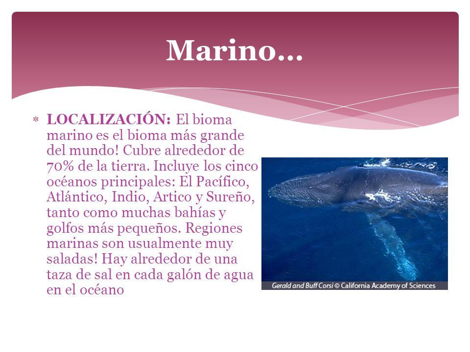Marino…