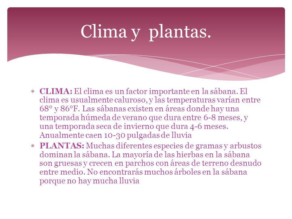 Clima y plantas.