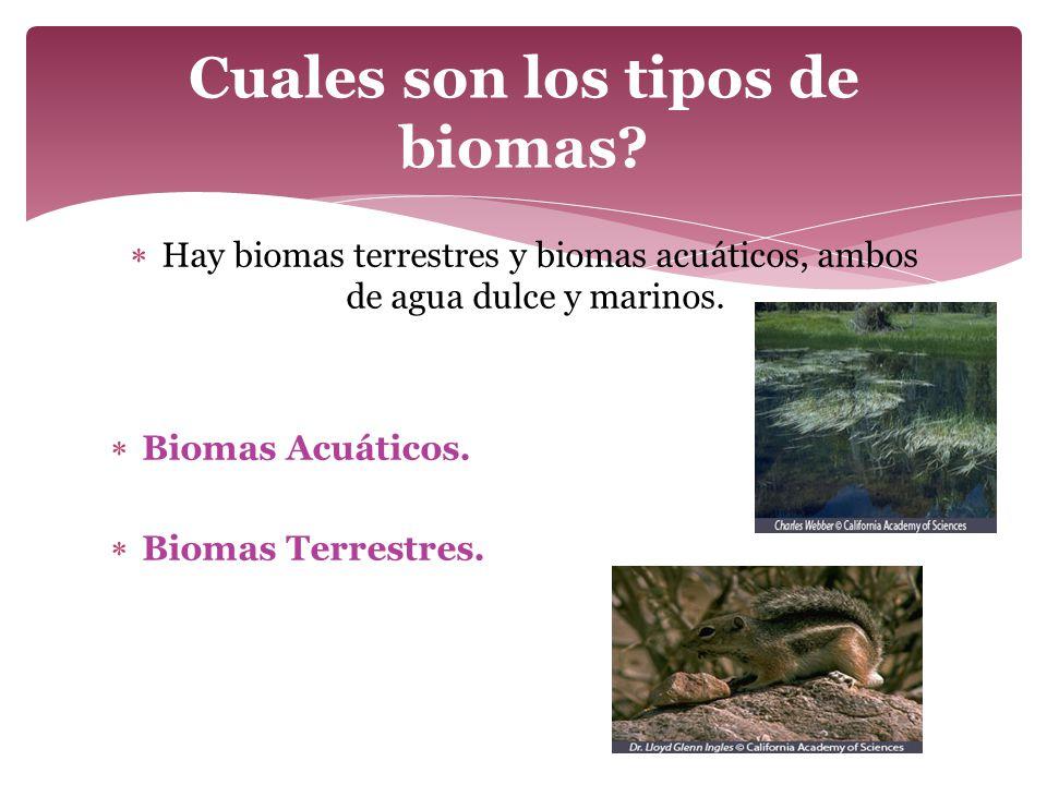 Cuales son los tipos de biomas