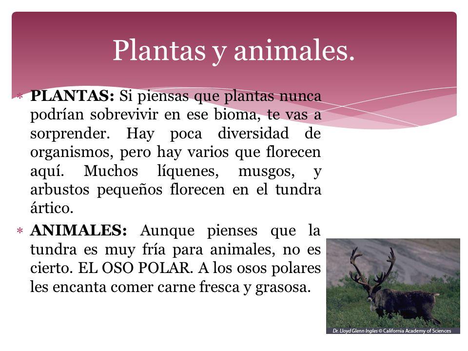 Plantas y animales.