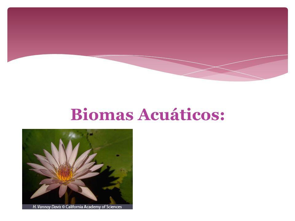 Biomas Acuáticos: