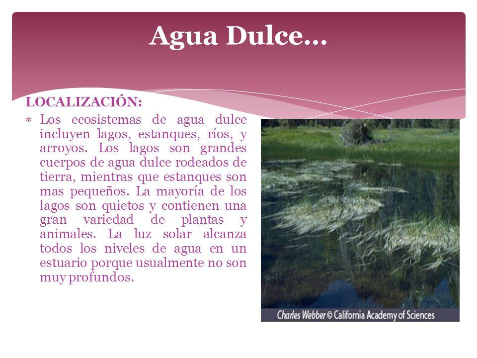 Agua Dulce… LOCALIZACIÓN: