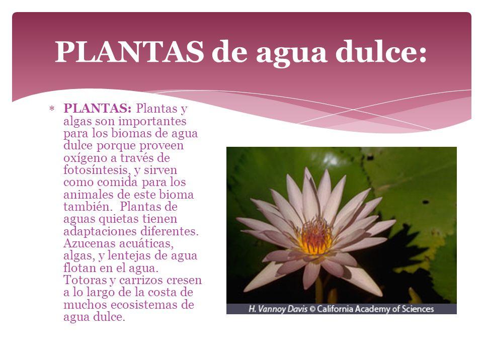 PLANTAS de agua dulce: