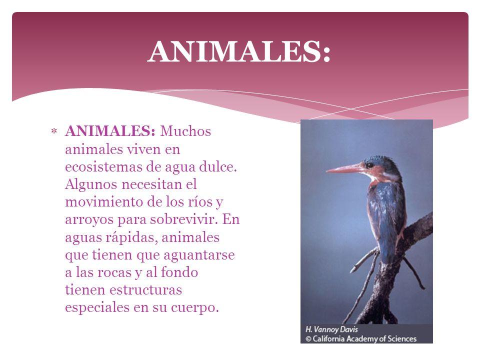 ANIMALES: