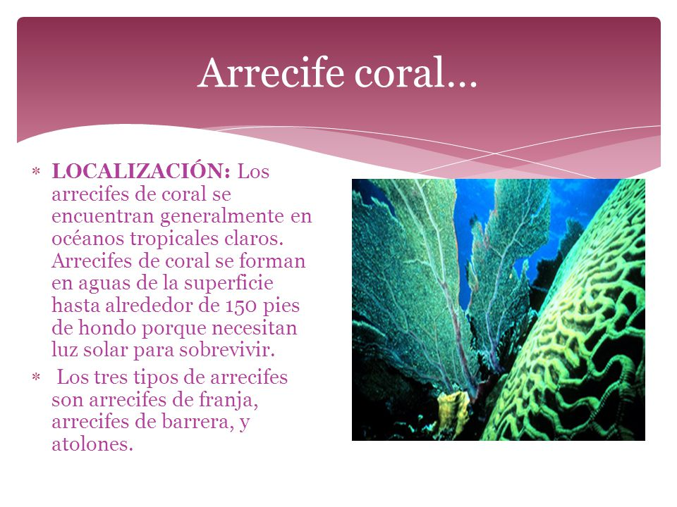 Arrecife coral…