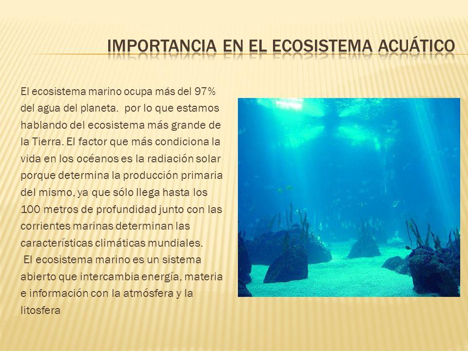 Importancia en el ecosistema acuático