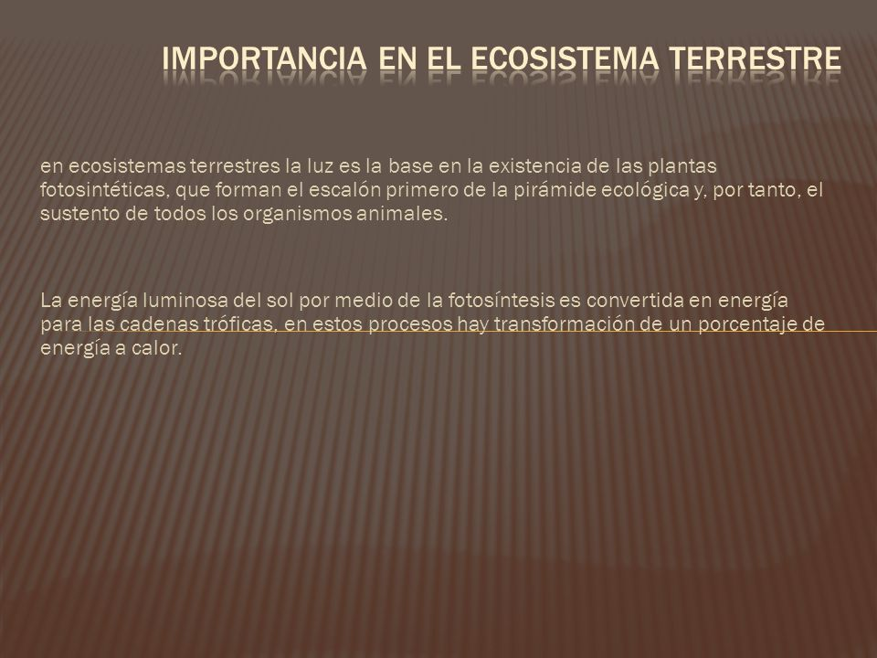 Importancia en el ecosistema terrestre