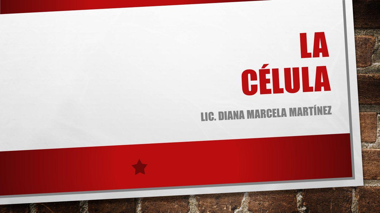 Lic. Diana marcela Martínez