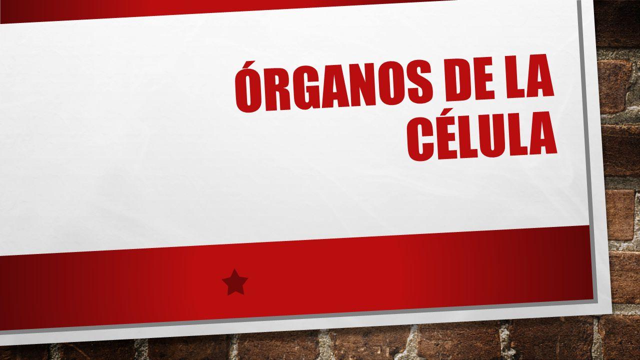 ÓRGANOS DE LA CÉLULA