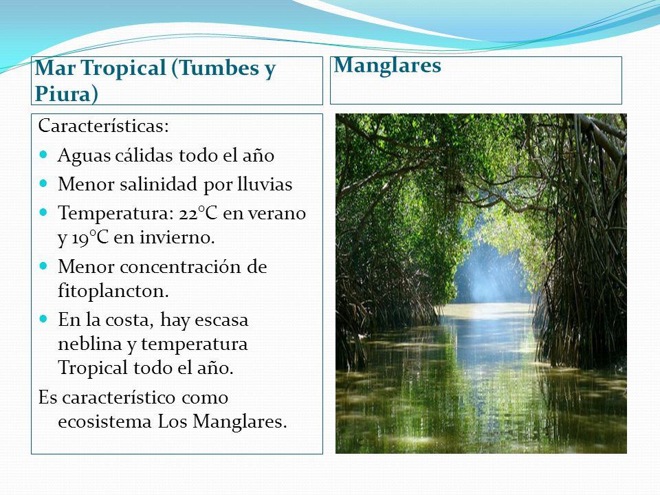 Mar Tropical (Tumbes y Piura) Manglares