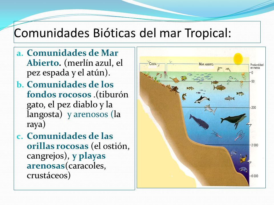 Comunidades Bióticas del mar Tropical: