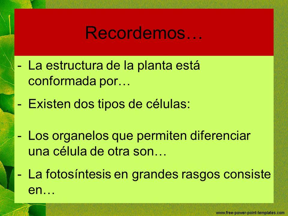 Recordemos… La estructura de la planta está conformada por…