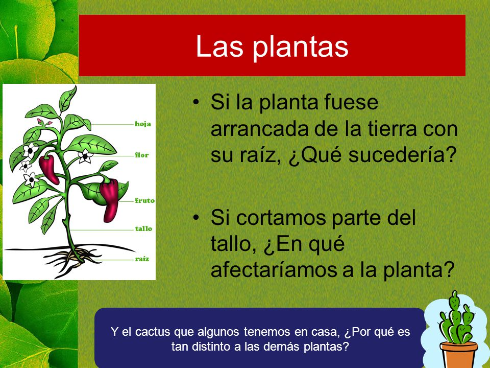 Las plantas Si la planta fuese arrancada de la tierra con su raíz, ¿Qué sucedería Si cortamos parte del tallo, ¿En qué afectaríamos a la planta