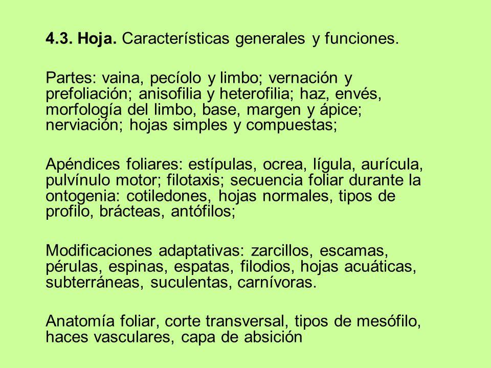 4.3. Hoja. Características generales y funciones.