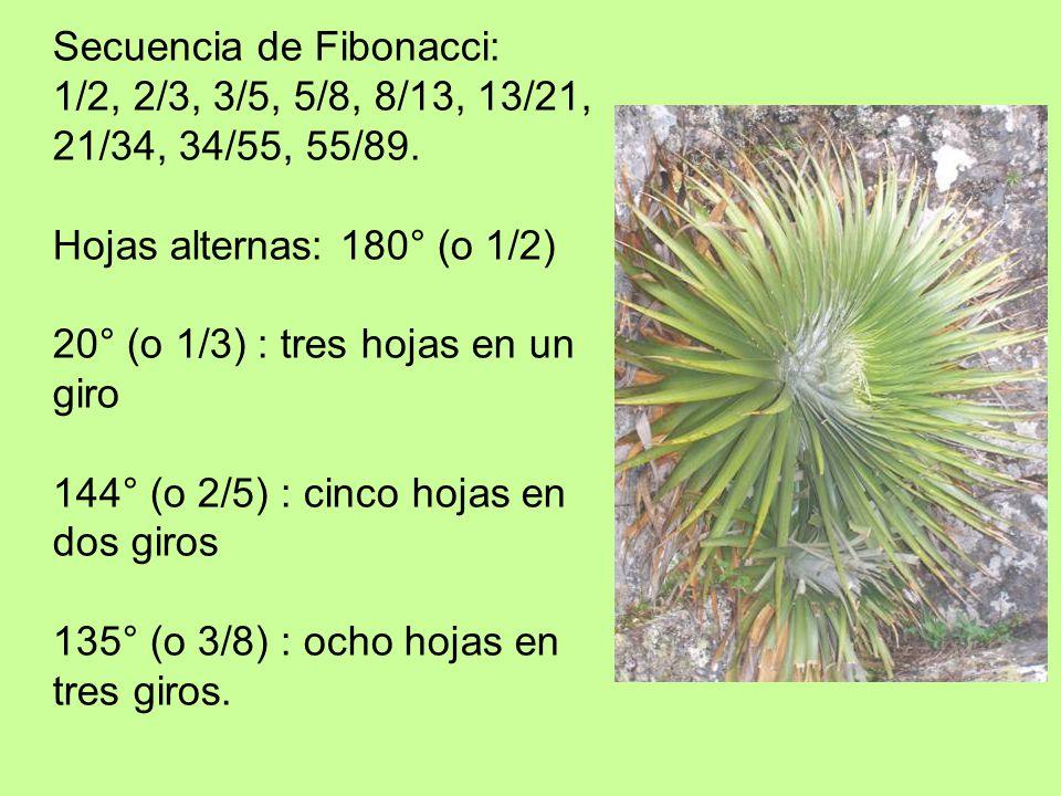 Secuencia de Fibonacci:
