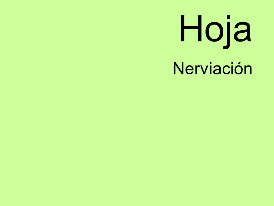 Hoja Nerviación