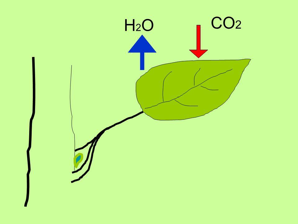 CO2 H2O