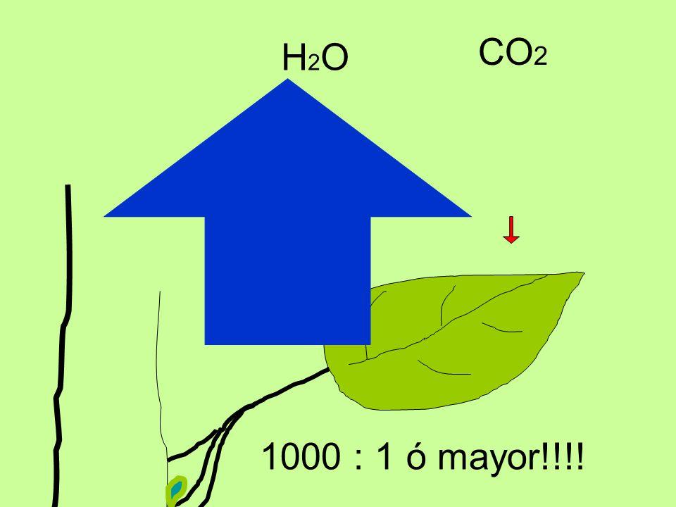 CO2 H2O 1000 : 1 ó mayor!!!!