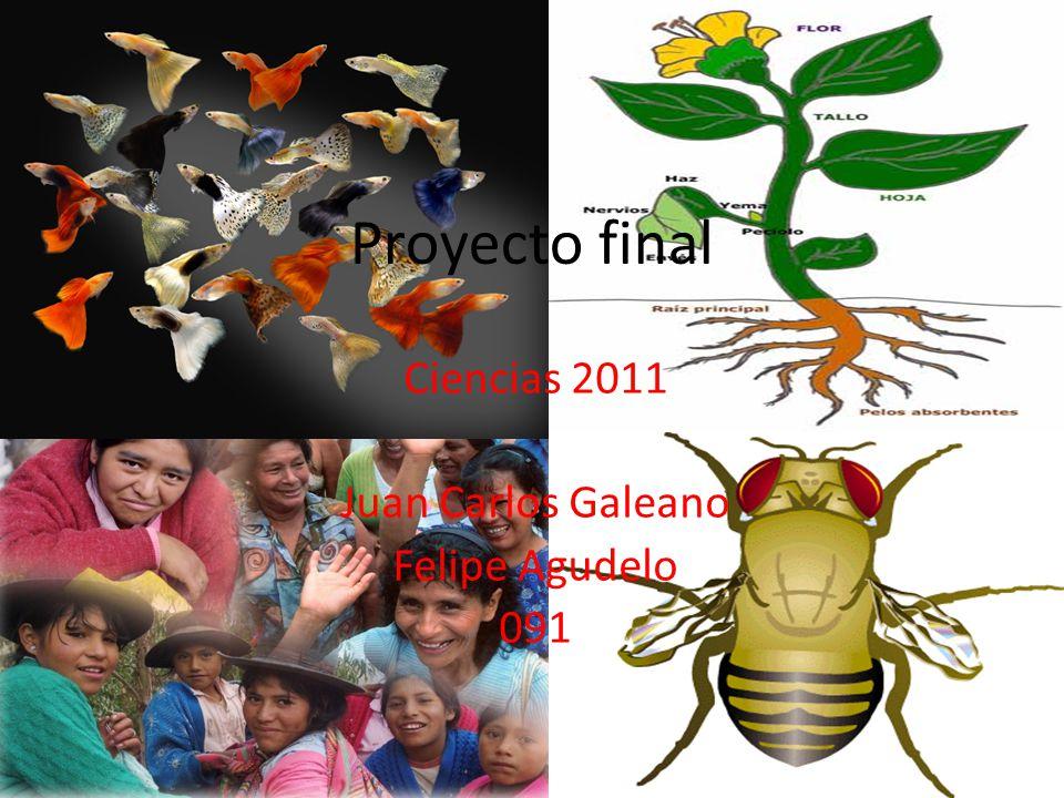 Ciencias 2011 Juan Carlos Galeano Felipe Agudelo 091