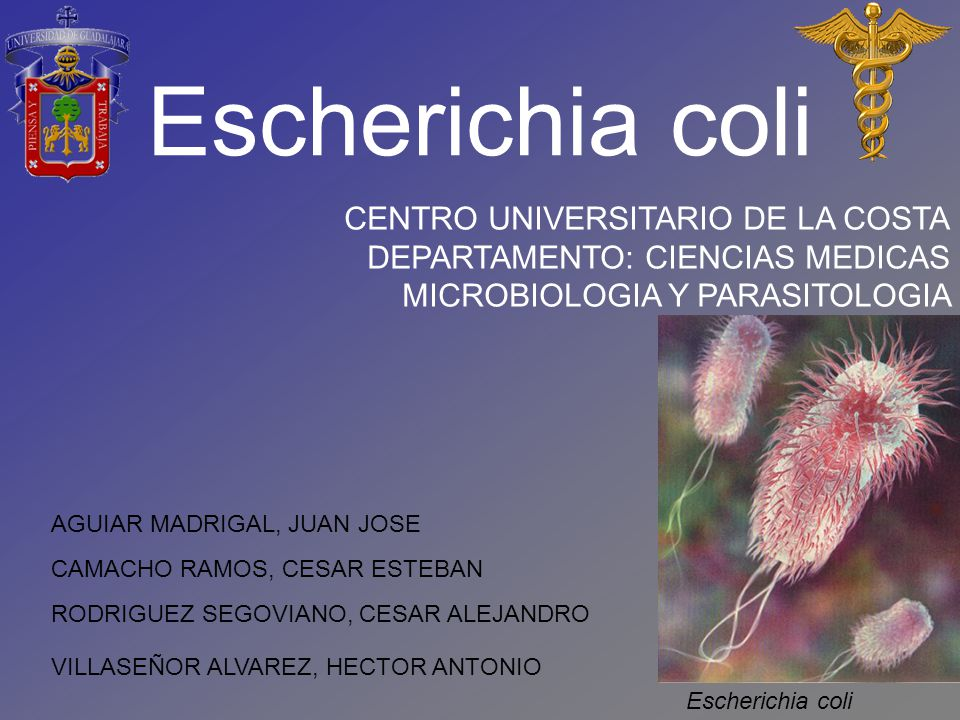 Escherichia coli CENTRO UNIVERSITARIO DE LA COSTA