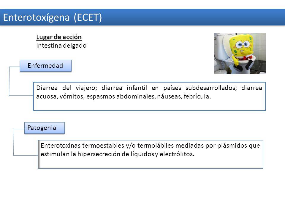 Enterotoxígena (ECET)